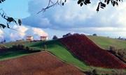 Emilia Romagna, dalla Regione 15,7 milioni di euro per gli agriturismi
