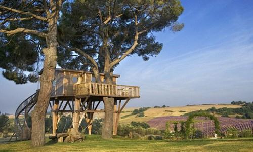 Veneto, i turisti potranno dormire in case sugli alberi